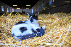Cat in a straw pile Stock Photography