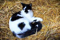 Cat in a straw pile Stock Images