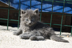 Cat. Stray cat; animal cute kitten stock image
