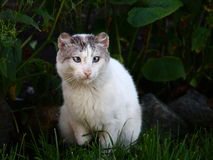 Cat. Stray cat sitting in grass Royalty Free Stock Photography