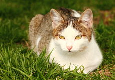 Cat. Stray cat sitting in grass Stock Image