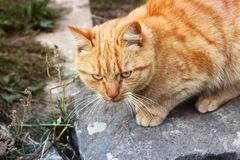 Cat on the street royalty free stock images