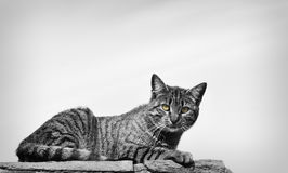 Cat in the street. A cat posing in the streets, a wall above Stock Photo