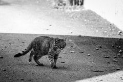 The cat. In the street Royalty Free Stock Photo
