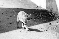 The cat. In the street Stock Image