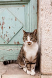Cat on street Royalty Free Stock Image