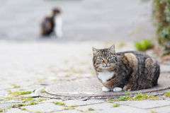 Cat on a street in the city with another cat on background Stock Photo
