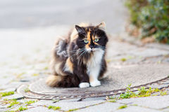 Cat on a street in the city, black, white and with green eyes Stock Photo