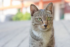 A cat on the street. Close up cat on the street Stock Photos