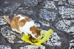 Cat on the street. Cat eating on the street Royalty Free Stock Photo