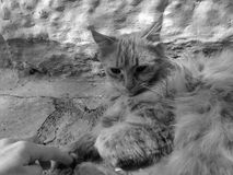 Cat on the street experiment black and white flowers noir stock images