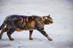 Cat on the street Royalty Free Stock Photos