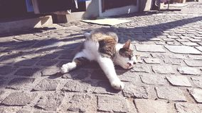 Lazy cute cat. Cat in the street Royalty Free Stock Photo