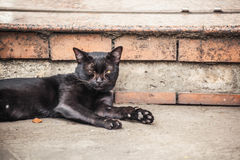 Cat on the street. Lonely black cat on the street, thailand Stock Photo