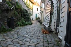 Cat street royalty free stock image