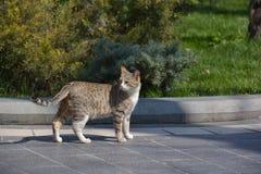 Cat on street Stock Photography