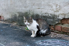 Cat on the street. Photo of a street mongrel cat in the street near an old brick wall Royalty Free Stock Image