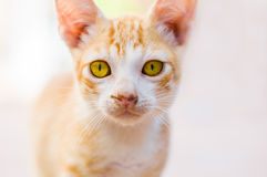 Cat in a street Royalty Free Stock Image