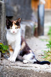 Cat on the street Stock Photography