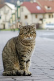 Cat on street Stock Images