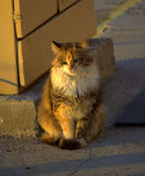 Cat on street Stock Photos