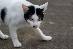 Cat. On the street somewhere in Bangkok Royalty Free Stock Photo