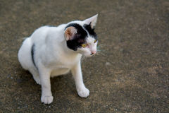 Cat. On the street somewhere in Bangkok Royalty Free Stock Images
