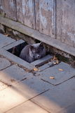 Cat in the street  Royalty Free Stock Photo