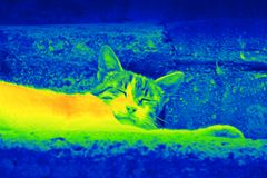 Cat on the street by thermal camera Stock Photo