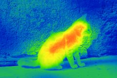 Cat on the street by thermal camera Royalty Free Stock Images