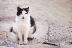 Cat on street in Valletta, Malta royalty free stock photos