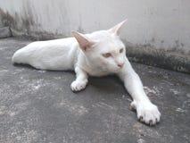 Free Cat Stretch Oneself On Ground Stock Photo - 144511750