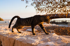 Cat Stretches Himself On Stone Parapet. Cat stretches himself on stone parapet and lit by the setting sun Royalty Free Stock Image