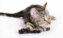 Cat stretching Stock Photo
