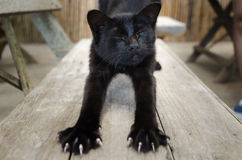 Cat stretching. Black cat stretching on the wood table Stock Photo