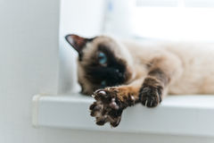 Cat stretching Royalty Free Stock Photos