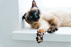Cat  stretching Royalty Free Stock Photo
