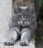 Cat stretching on fence Royalty Free Stock Photo