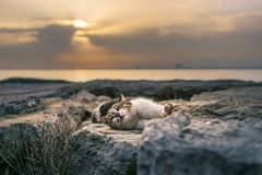Cat stretching on rocks at sunset royalty free stock images