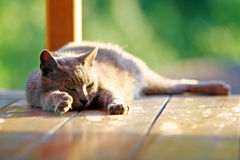 Cat stretching on wooden stand Royalty Free Stock Image