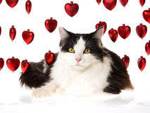 Cat with strings of red hearts on white Royalty Free Stock Photo