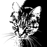 Cat striped black and white portrait Royalty Free Stock Photo