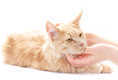 Cat stroking Stock Photo