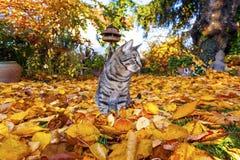 Cat strolling around in the garden Stock Photo