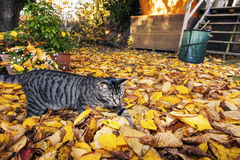 Cat strolling around in the garden Stock Photos