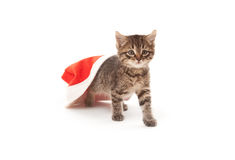 Cat stuck at Santa's hat on white Royalty Free Stock Images