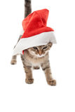 Cat stuck at Santa& x27;s hat on white Royalty Free Stock Photos