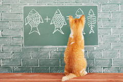Cat studied mathematics. Education idea about foxy Cat studied mathematics on example of addition of fish Stock Image