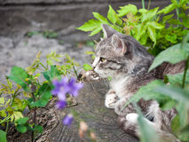 Cat on the stump. Grey cat sitting on the stump Stock Photos