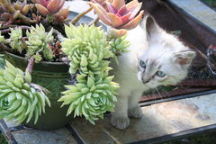 Cat and Succulents Stock Photo